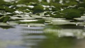 В Кишиневе 12 июня без осадков, температура воздуха - плюс 26