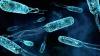ВОЗ предупреждает, что многие бактерии стали устойчивыми к антибиотикам
