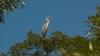 """В заповеднике """"Прутул де жос"""" 192 вида птиц, многие из них занесены в Красную книгу Молдовы"""