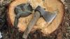 Более 40 дубов были незаконно срублены в лесопосадке вблизи Бельц