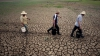 В Корее страшная засуха