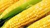 Кукуруза официально объявлена культурным наследием Коста-Рики