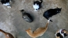 Бездомные кошки оккупировали американский остров Тонаванда штат Нью-Йорк