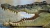 Трехметровый крокодил не догнал туриста (ВИДЕО)