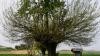 В итальянском регионе Пьемонт дерево растет на дереве