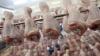 В Приморье задержана английская курятина, зараженная опасной бактерией