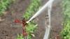 Завершаются работы по реконструкции оросительной системы в селе Лопатна