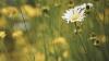 В последний день недели и лета в Молдове солнечно