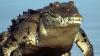 Встреча с аллигатором: Ребенок сумел отбиться от рептилии