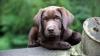 Опрос: молдаванам собаки нравятся больше, чем кошки