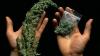 Криминальная группировка задержана в момент продажи наркотиков (ВИДЕО)