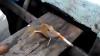 Видеоролик с курящей рыбой возмутил зоозащитников
