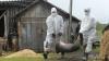 В Молдове опасаются вспышки африканского свиного гриппа