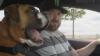Как чемпион по дрифту и его пес ездят в супермаркет (ВИДЕО)
