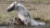 Лошадь два дня дожидалась спасения из болота
