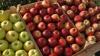 Минсельхоз готовится объявить итоги тендера на поставку яблок в школы и детсады Молдовы