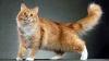 Австралийская кошка по кличке Салли разбудила своего хозяина, когда в его доме начался пожар