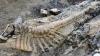 В пустыне Чиуауа найдено крупнейшее в мире скопление останков доисторических животных