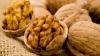 Все сорта ореха, которые есть в Молдове, можно было увидеть в селе Бардар