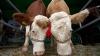 Число больных сибирской язвой в Кагуле может увеличиться