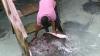 На Мальдивах огромные скаты едят прямо с рук (ВИДЕО)