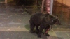 Испанский артист привязал медведя к столбу, чтобы пойти выпить в баре