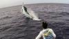 Рыбак из Дании поймал гигантского голубого марлина (ВИДЕО)