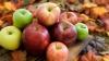 Экспорт молдавских яблок в Белоруссию вырос в 24 раза