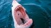 Ученые: акулы убивают мужчин в девять раз чаще, чем женщин