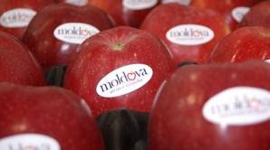 Через месяц Россельхознадзор решит судьбу импорта молдавских овощей и фруктов