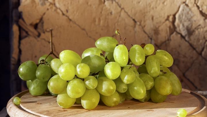 В Малых Милештах приступили к сбору белого винограда технических сортов