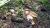 В Чехии школьница пытала в лесу 10-летнюю девочку и отрубила ей палец