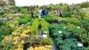 На ярмарке  в Ботаническом саду представлено более 400 видов декоративных растений