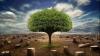 Около тысячи гектаров зелёных насаждений лишился Кишинев за последние 20 лет