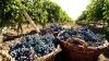 В день без алкоголя жители села Кобань, Глодянского района заканчивают делать вино