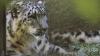 Экзотических птиц и хищников в столичном зоопарке перевели в хорошо отапливаемые помещения