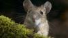 В Норвегии мышь задержала вылет самолета