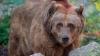 Из армянского ресторана сбежал медведь