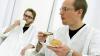 Британским врачам запретили пить чай и кофе на работе