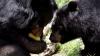 В США запретили селфи с медведями