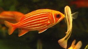 Ученые узнали о любви рыб к играм