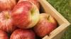 Правительство выделило 16 млн леев в качестве компенсаций для производителей яблок