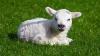 Аргентинские учёные научились клонировать животных, при этом изменяя их пол