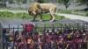 В Чили работает зоопарк, в котором все наоборот