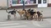Проект регламента предусматривает запрет на убийство бездомных животных