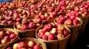 Минсельхоз хочет сбыть яблоки в детсады и школы. Там говорят, что столько фруктов не нужно