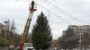 Столичные власти продолжают поиск новогодней ёлки