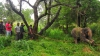 Слон на Шри-Ланке задавил двух паломников