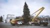 Рождественскую ель установили в центре столицы (ФОТО)