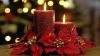 Рождественские традиции и обычаи в разных странах